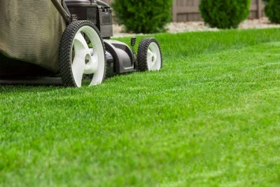 Easy Ways to Maintain a Healthy Lawn